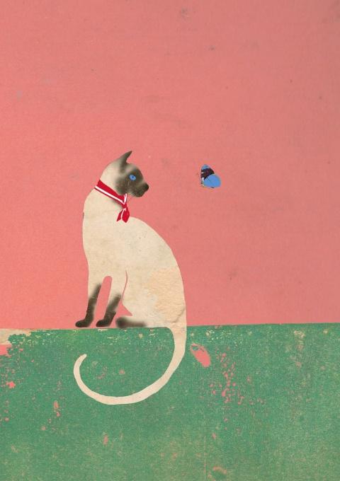 Lagom, Cat