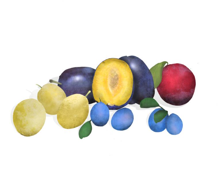 Waitrose, Regal & Stone Fruits