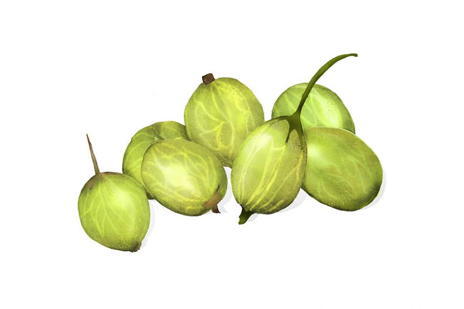 Waitrose, gooseberries