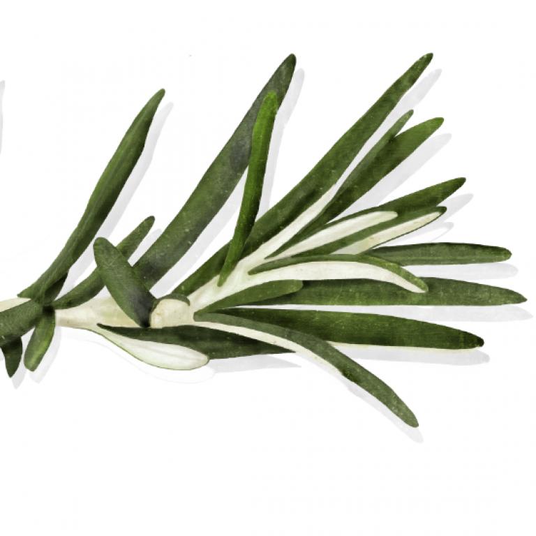 Rosemary, Waitrose